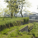 Okitsu natural farm in Awa, Shikoku, Japan (Photo: P.M. Lydon | Final Straw)