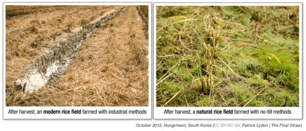 Modern Farming v Natural Farming (CC BY-NC-SA, Patrick Lydon | The Final Straw)