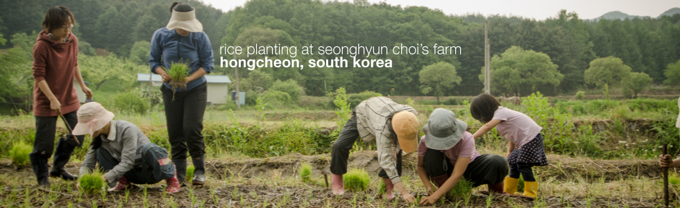 Rice planting at Seonghyun Choi's farm in Hongcheon, South Korea