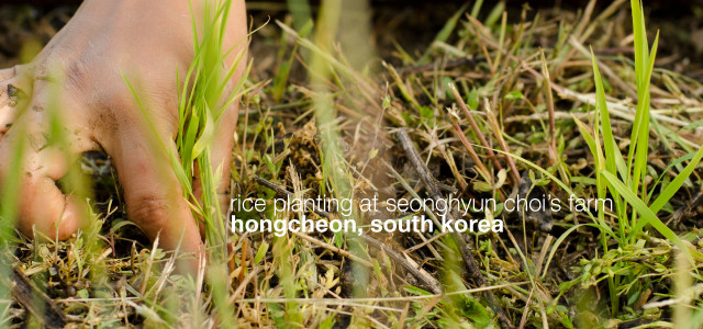 Rice planting at Seonghyun Choi's farm, Hongcheon, South Korea