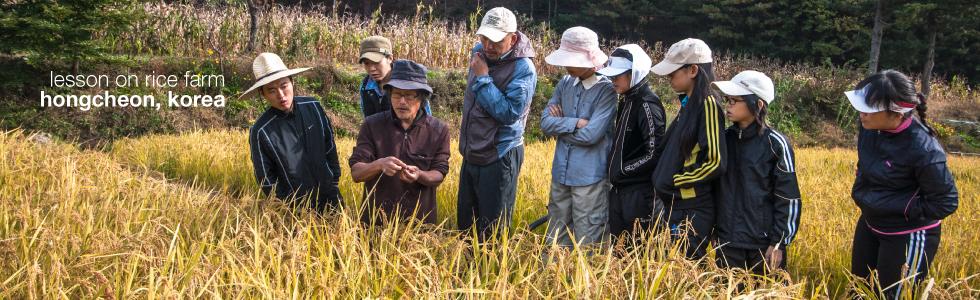 Rice farm lesson in south korea