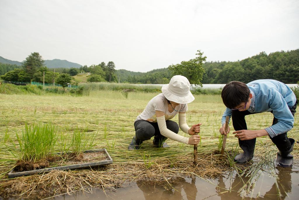 hongcheon-farm-plant_PML6965