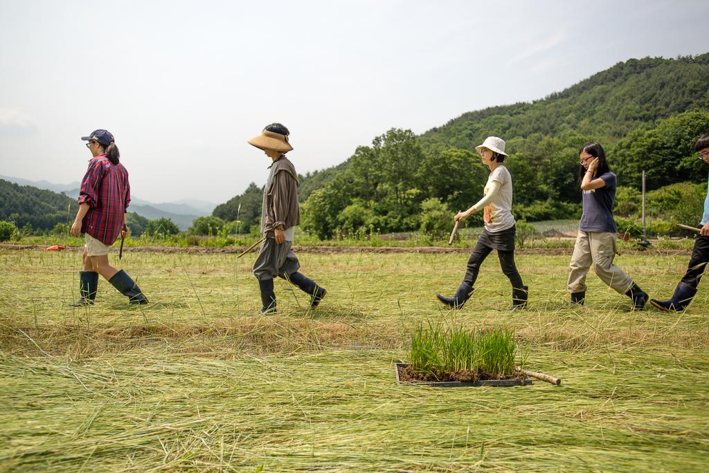 hongcheon-farm-plant_PML6981