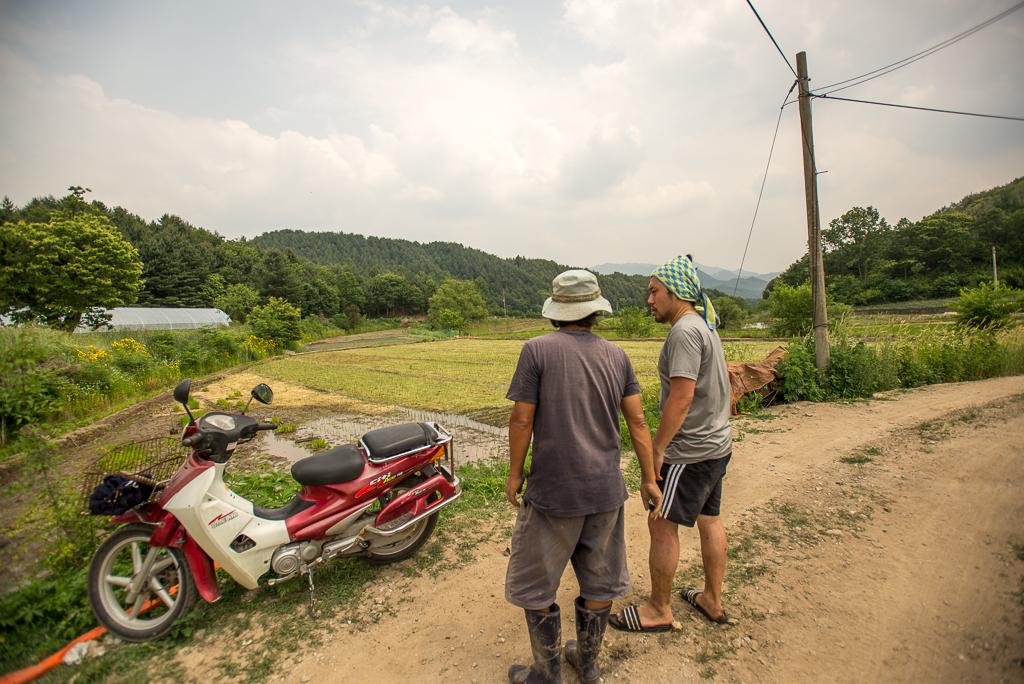 hongcheon-farm-plant_PML7022