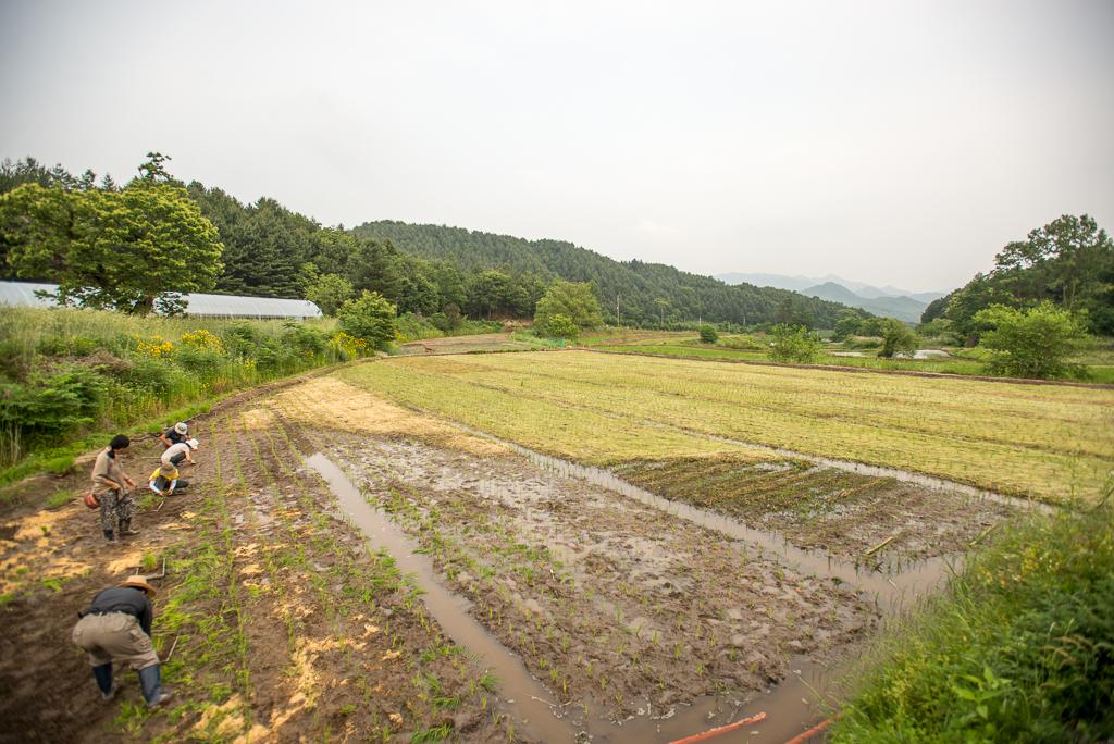 hongcheon-farm-plant_PML7030