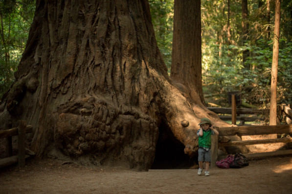 Henry Cowell Redwoods, in the Santa Cruz Mountains, California (photo: P.M. Lydon, Final Straw | cc by-sa)
