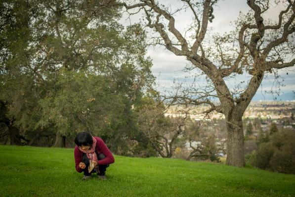 Suhee examining the wild grasses springing up at Bel Gatos Park